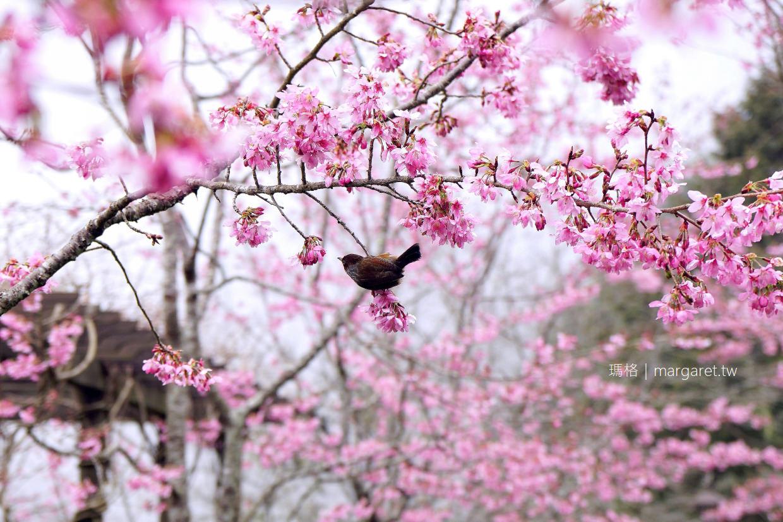2021阿里山櫻花季。賞櫻景點6選|交通。訂房優惠。行程推薦 (持續更新)