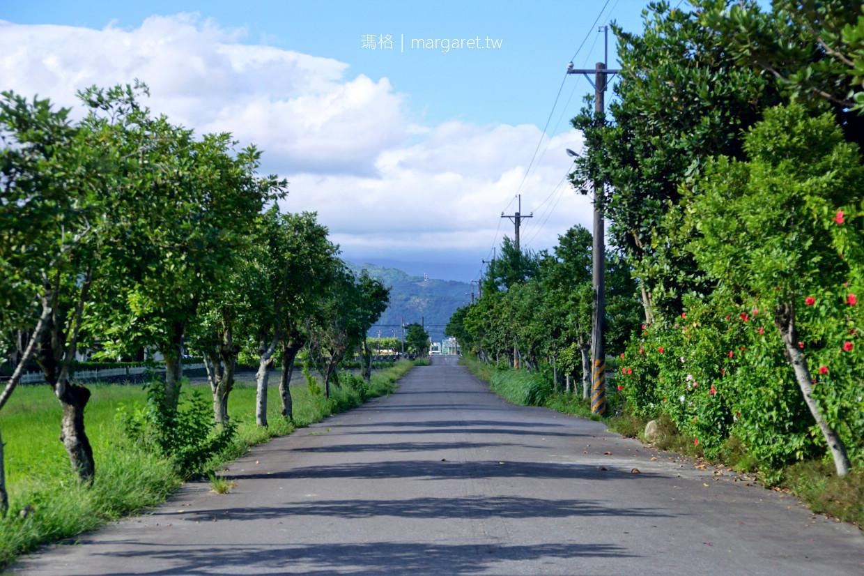 宜蘭安農溪。蛻變後的美麗河川|田心橋落羽松林。自行車道。台灣三大泛舟勝地