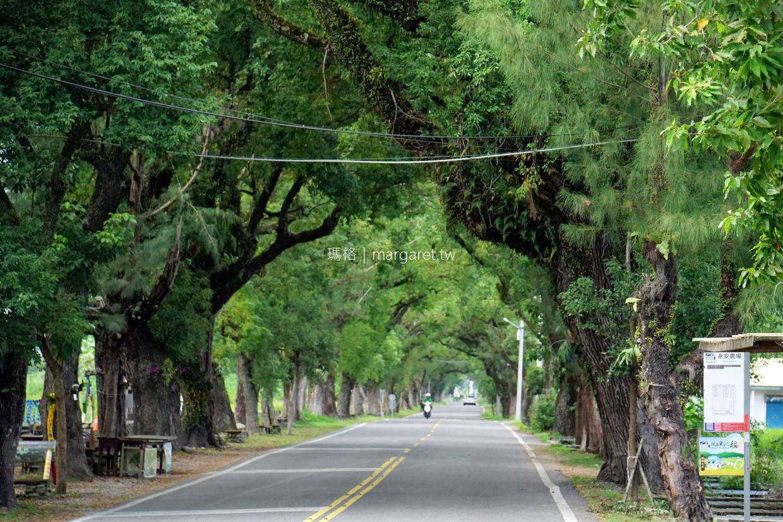 武陵綠色隧道。台東2626市集|樟樹、木麻黃夾道歡迎 @瑪格。圖寫生活