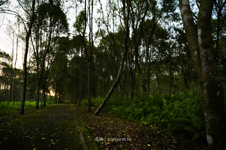 2021大農大富螢火蟲季。3/15開跑|花蓮森林裡的自然光之饗宴(交通建議)