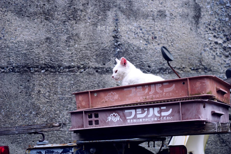 熊本貓島。貓跟島民一樣多|百年湯島燈塔戀愛聖地 (交通建議)