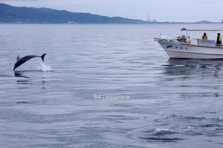 天草半日遊。不分季節出海賞海豚成功率達98%|中文網路預約。交通建議
