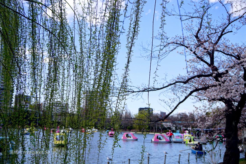 上野公園。染井吉野櫻開了|東京賞櫻