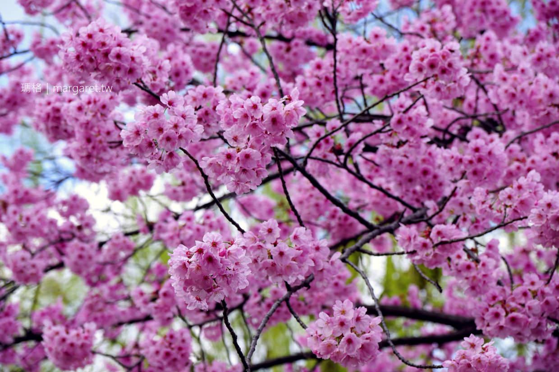 東京賞櫻10選。2020日本賞櫻預測情報|花見野餐。夜櫻食尚(2020.1.9更新)