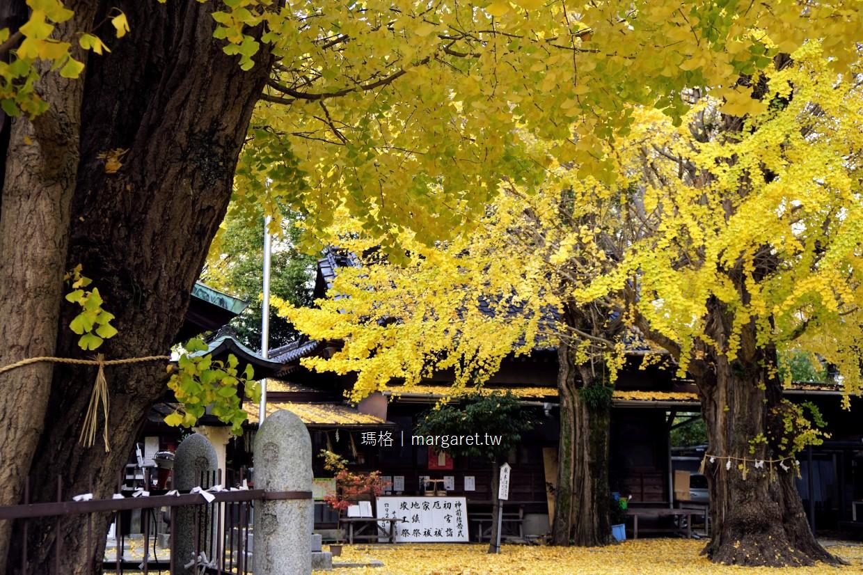 二日市八幡宮。百年大銀杏神木|太宰府順遊紅葉景點