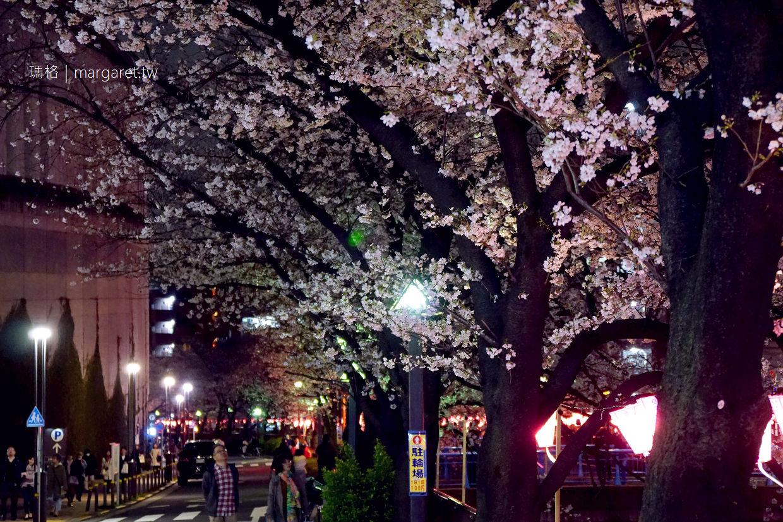 目黑川夜櫻(滿開)。3/24點燈了|從人潮少的池尻大橋開始逛|東京賞櫻