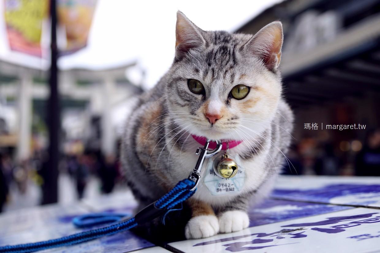 福岡。太宰府天滿宮表參道漫遊|巧遇可愛貓咪拍瘋了