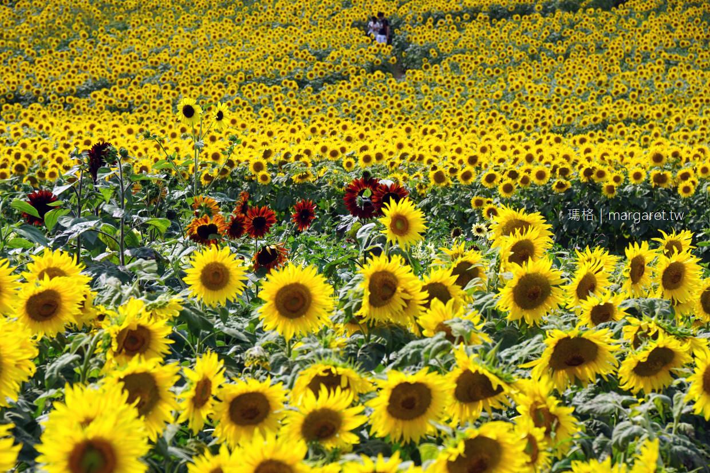 喜多方。三之倉高原向日葵花節|日本東北最大規模 (交通建議) @瑪格。圖寫生活