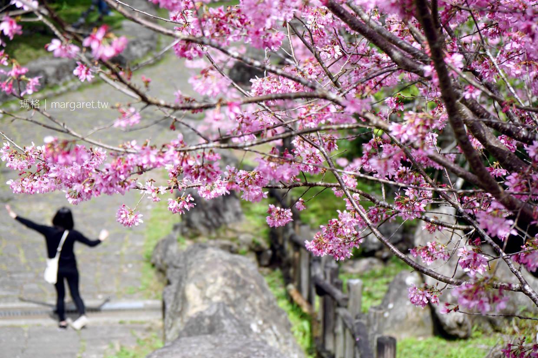 最新推播訊息:暖冬效應!阿里山迷糊不到櫻花開了