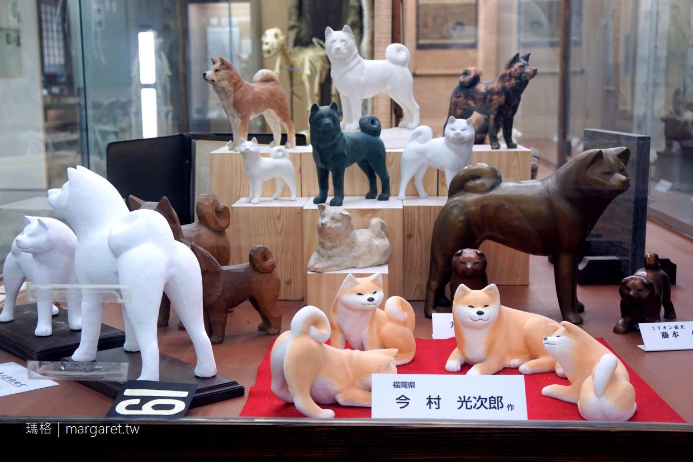 秋田犬會館。忠犬小八故事|體驗被秋田犬遛人滋味