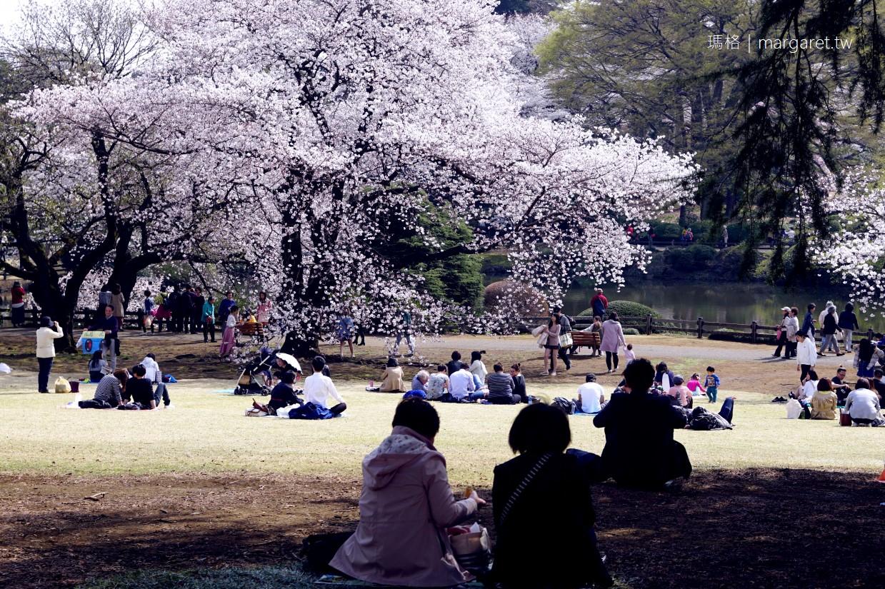 新宿御苑。櫻花樹下野餐首選|2018東京賞櫻即時報