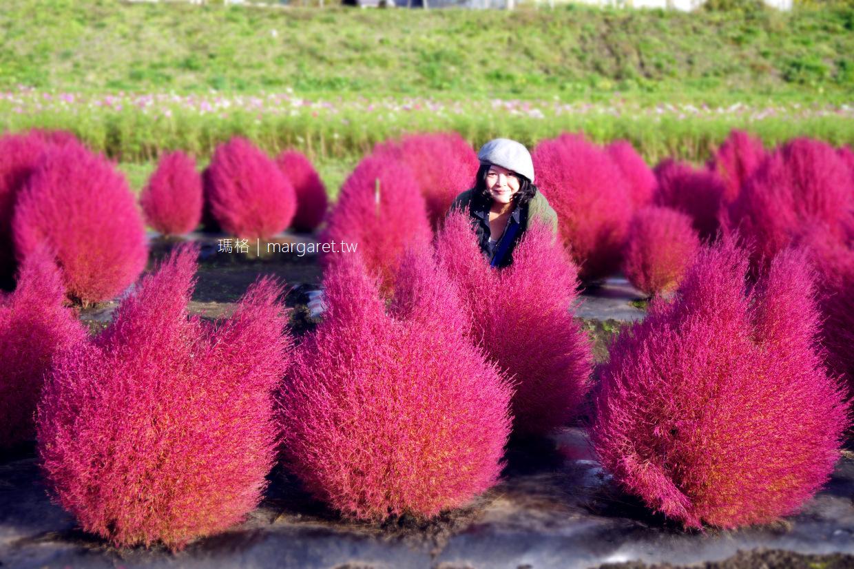 超萌龍貓掃帚草。日本東北紅葉|豬苗代利時達大飯店(二訪更新)