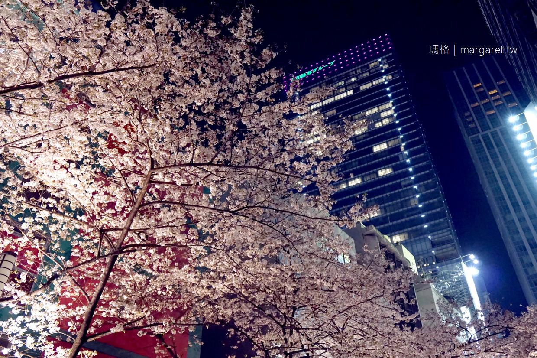 八重洲櫻花通。東京車站通往日本橋的夢幻櫻花隧道|東京賞櫻