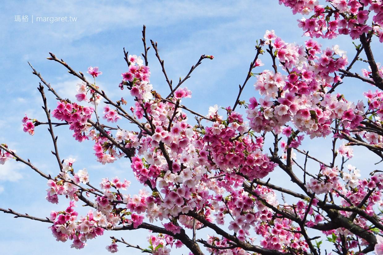 樂活公園櫻花盛開。台北賞櫻 2020內湖樂活夜櫻季