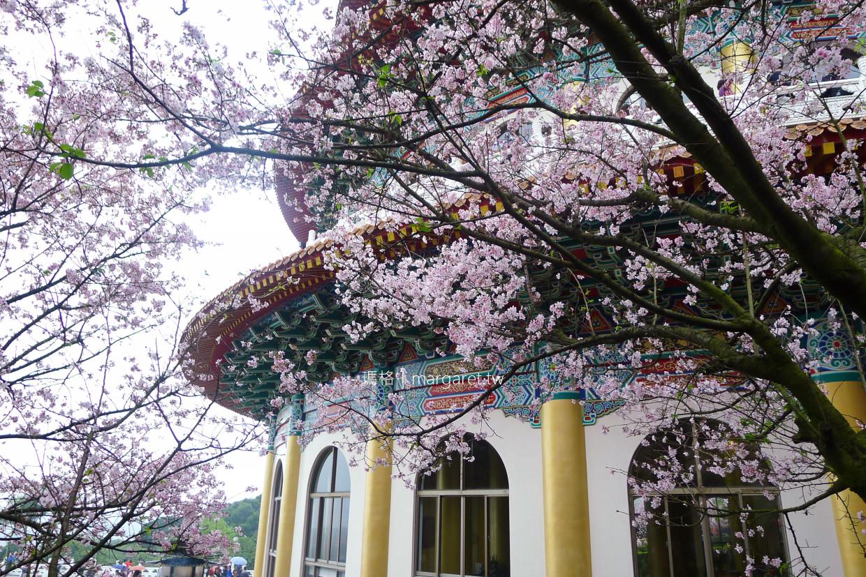 淡水天元宮。新北市賞櫻景點|跟台灣山櫻結婚的吉野櫻 @瑪格。圖寫生活